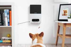 Petcube Bites review: Interactive camera indulges your pets with treats while you're away