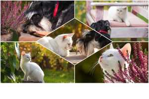 Adobe Photoshop Elements 2019 review: New automated features rely on AI