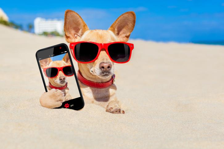 dog_phone_selfie_photo