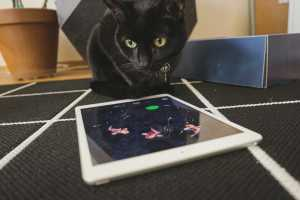 This iOS game was made for a cat and reviewed by a cat